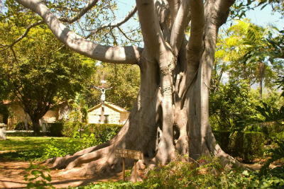 tree roots and sewer line repair San Diego CA